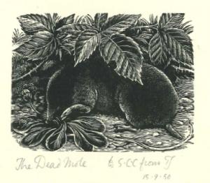 Dead mole snip1